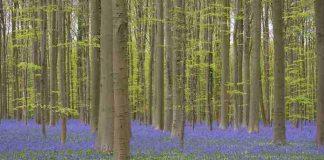 hutan yang tampak seperti di negeri dongeng