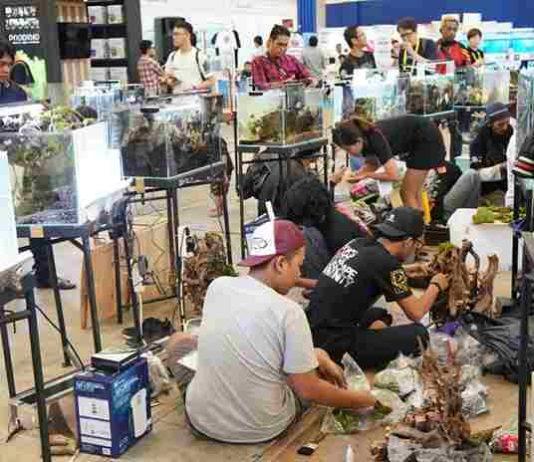 Indonesia siap merajai pasar ikan hias dunia