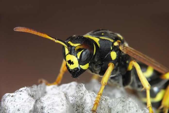 serangga paling mematikan