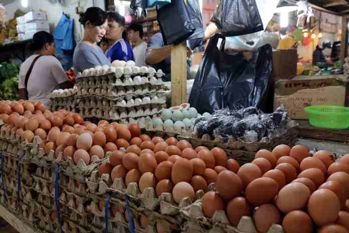 harga telur naik