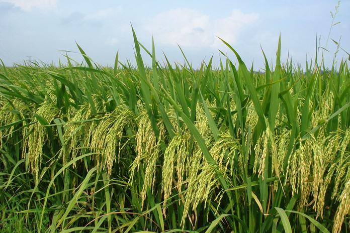 pertanian berbasi s teknologi