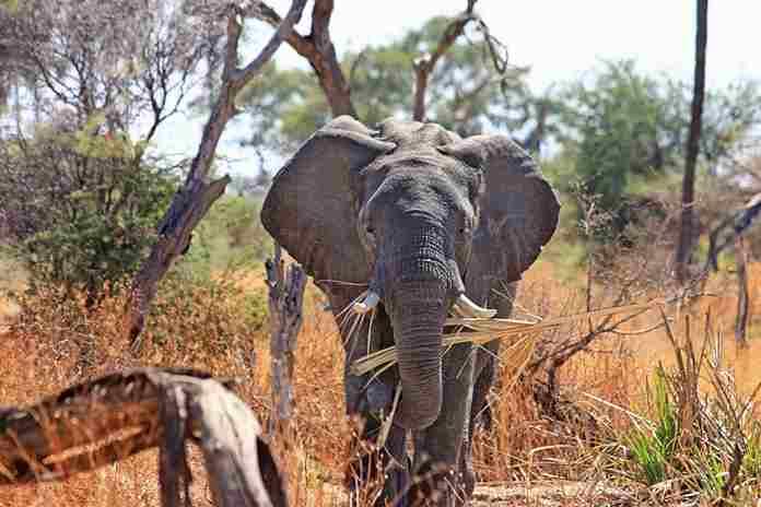lima ekor gajah mati tertabrak kereta