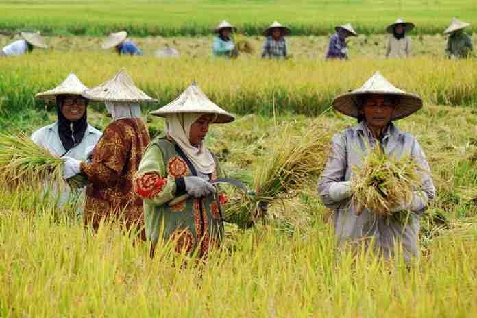 minimnya generasi muda yang jadi petani
