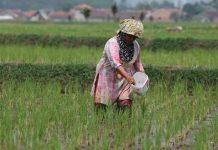 neraca perdagangan sektor pertanian