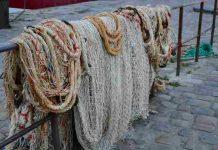 Hiu paus terjerat jaring nelayan