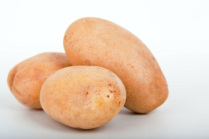 cara menanam kentang hidroponik