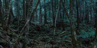 Aokigahara, hutan bunuh diri