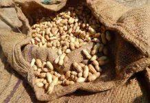 konsumsi kacang tanah sangat bermanfaat