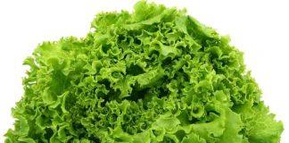manfaat selada untuk kesehatan