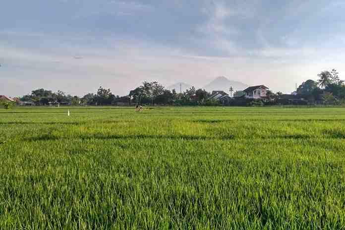 Sawah seluas 5,9 hektare rusak akibat banjir