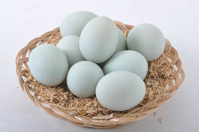 telur dari hewan apa yang paling bergizi dan kaya manfaat