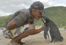 seekor penguin berenang sejauh 8000 km