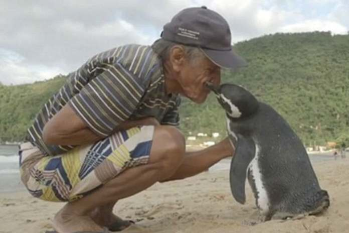 seekor penguin berenang sejauh 8.000 km