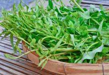 manfaat kangkung yang luar biasa untuk kesehatan