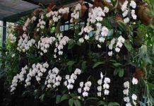 jenis tanaman bunga paling populer