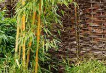 tanaman pencegah banjir