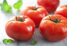 cara menanam tomat beef secara hidroponik