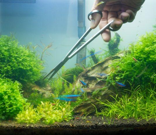 cara merawat aquascape