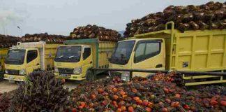 ekspor minyak sawit