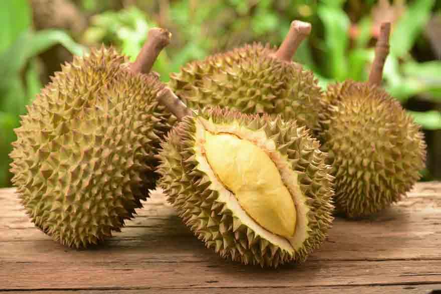 fakta gizi durian