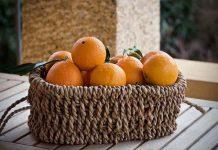 asal muasal jeruk