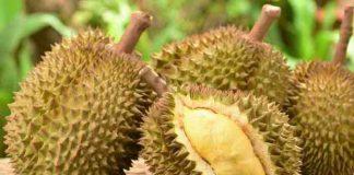 keistimewaan durian bawor