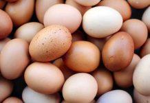 warna telur ayam