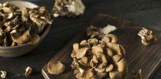 manfaat ajaib jamur maitake