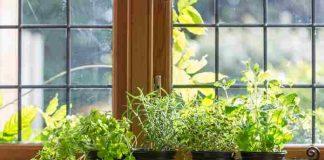 rempah yang bisa ditanam dalam pot