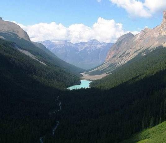 Ribuan Hektare Hutan Taman Nasional Lorentz Rusak