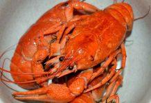 syarat hidup lobster