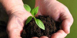 tanaman enyerap air hujan