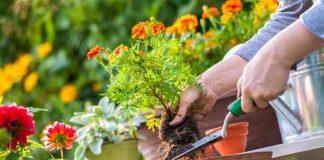 berkebun bunga