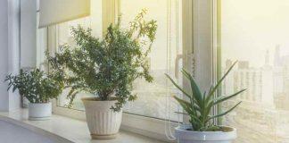 tips menjaga tanaman apartemen