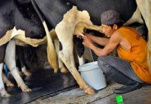 darurat susu segar
