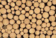 kayu yang lebih kuat dari besi