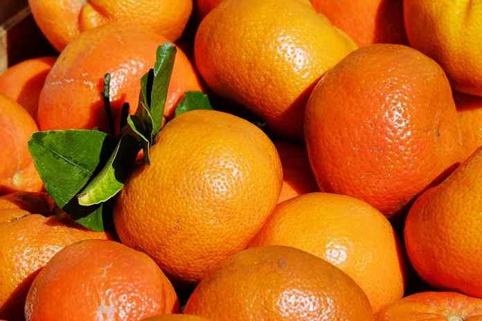 memilih jeruk manis