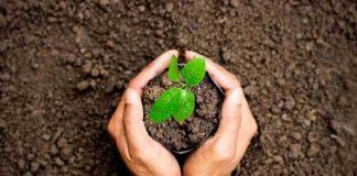 keuntungan menanam pohon