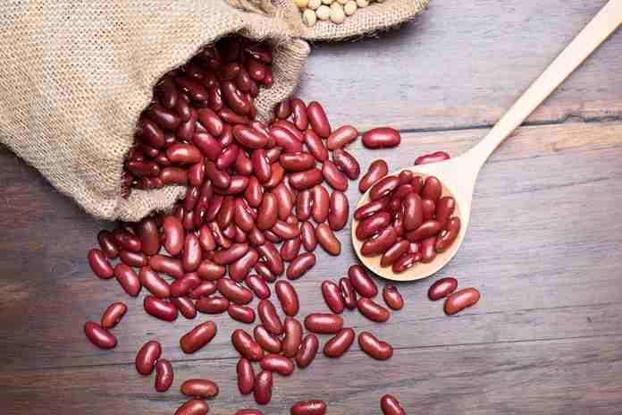 menanam kacang merah
