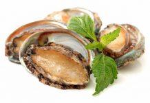 mengenal abalon