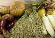 Indonesia bisa jadi pemasok pangan utama dunia
