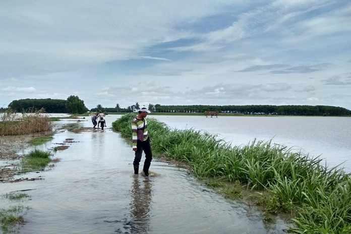 Ribuan hektare sawah di Lampung Selatan