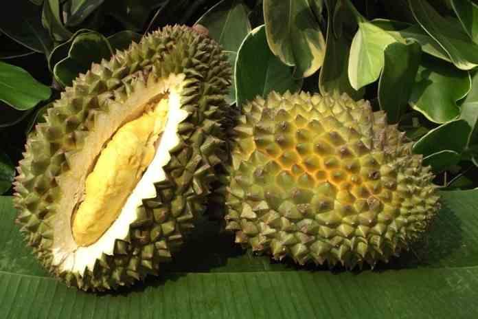 Australia hadirkan festival durian