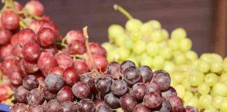 warna anggur berbeda