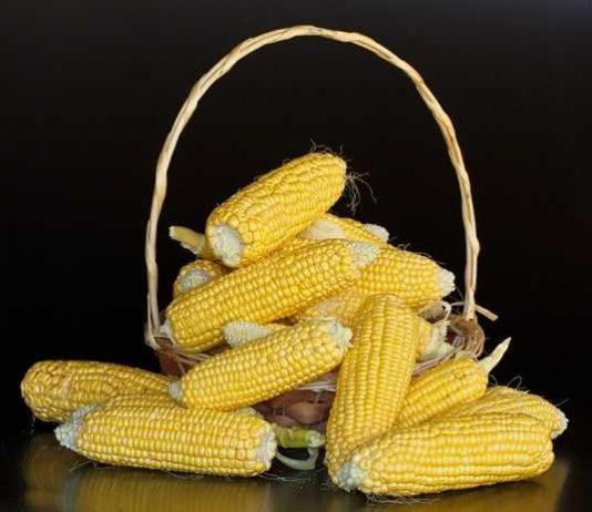 Manfaat jagung
