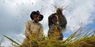 petani jadi peserta AUTP
