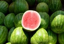 tips memilih semangka