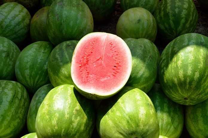 Image result for memilih semangka