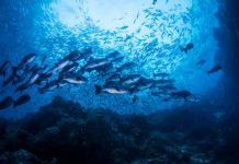 Ikan laut dalam