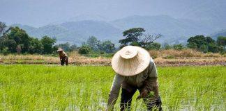 Petani pertama Asia Tenggara